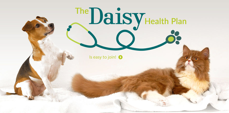 Daisy Health Plan