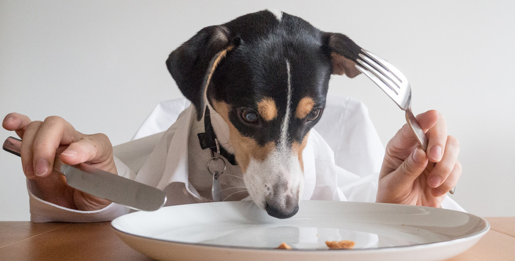 The Dog's Dinner: Dos and Don'ts