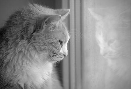 Older Cat Arthritis