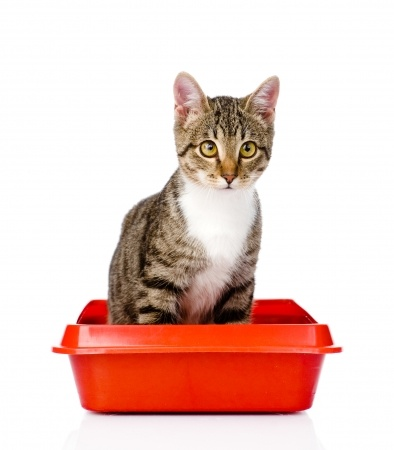 cat sat on red litter tray