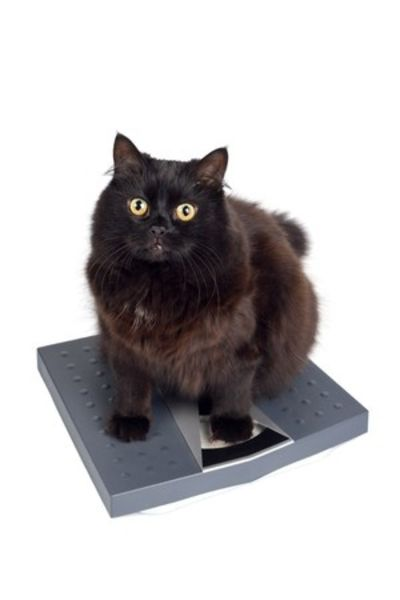 cat sat on weigh scales