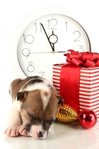 christmas puppy dog with clock and gift