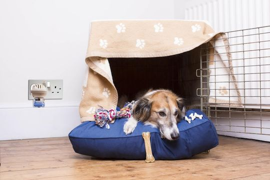 Dogs should have a safe haven or den to retreat to in the home