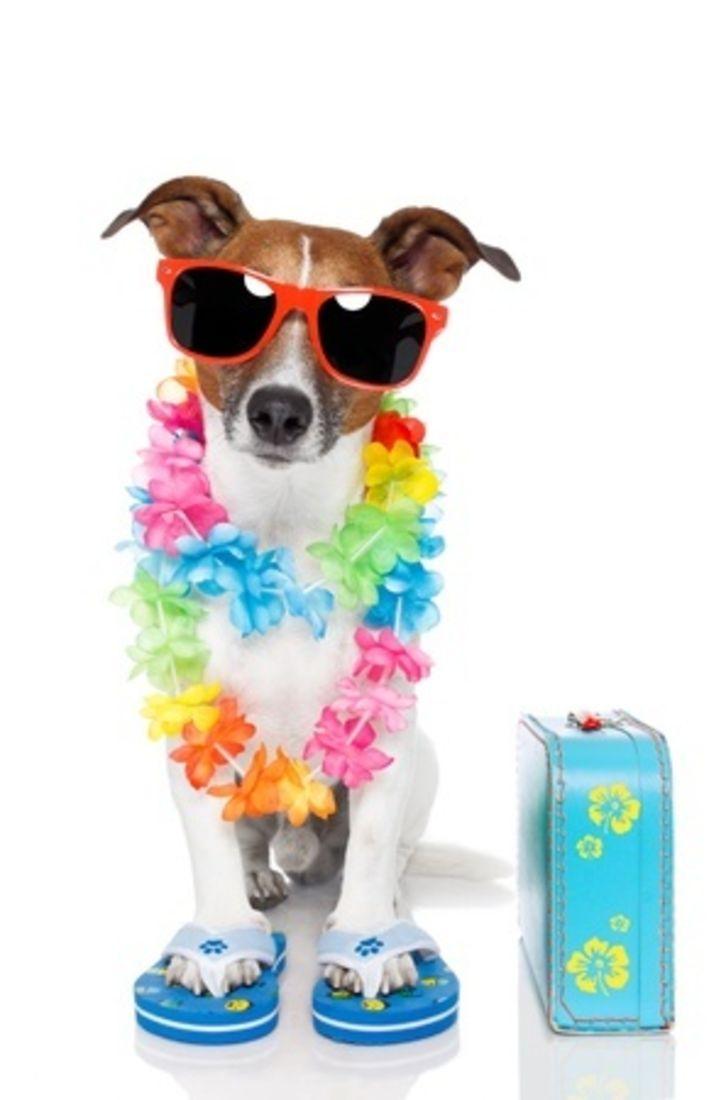 Dog Friendly Holidays Abroad