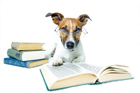 dog reading on white background