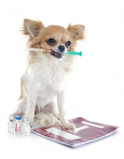 dog with vaccination in mouth on white background