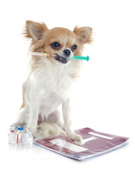 dog with vaccination in mouth on white-background