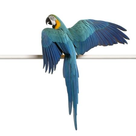 parrot wing clipping birds birds amp exotics animals