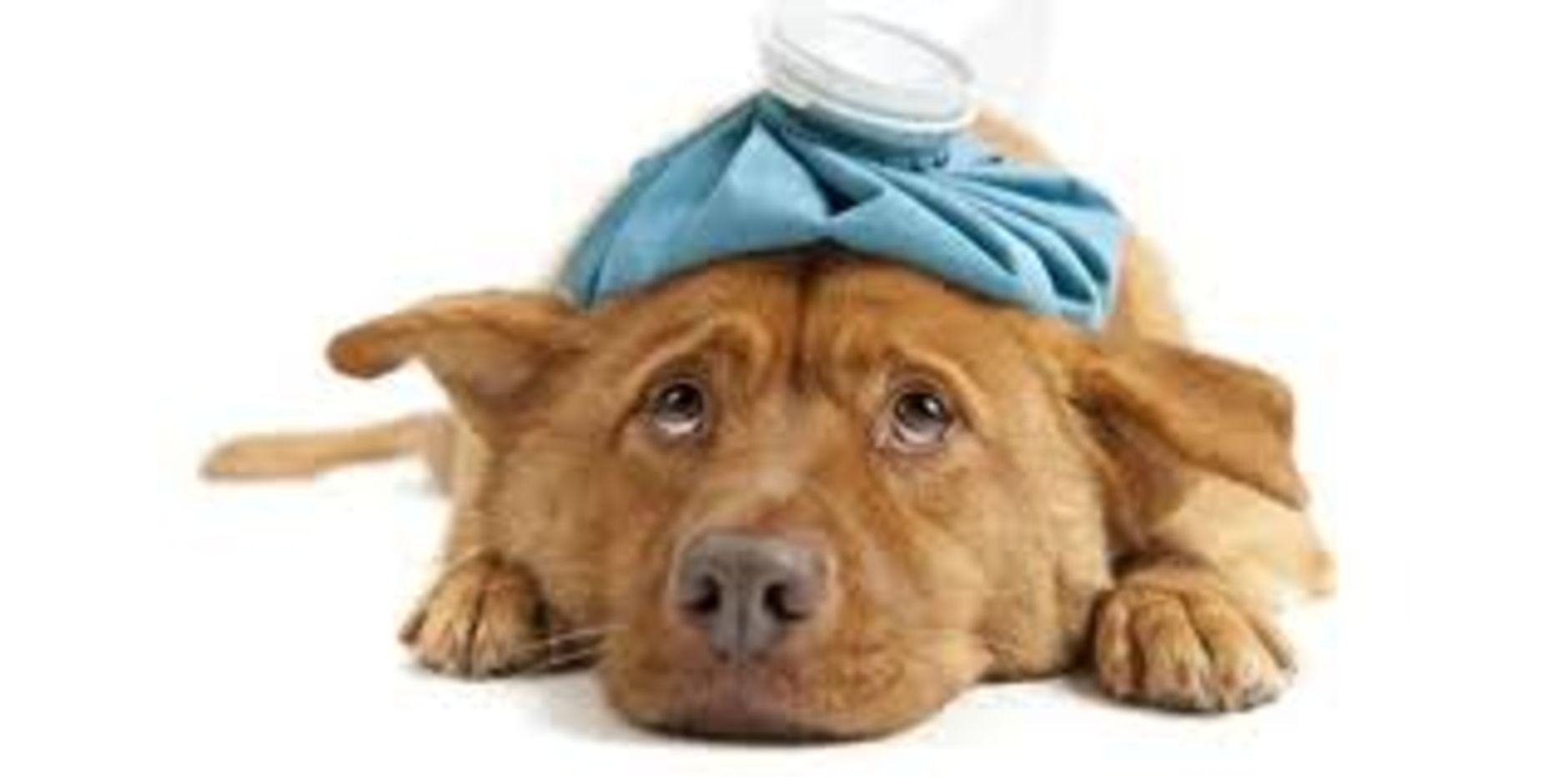 dog vet emergency pets world