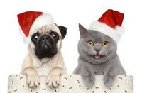 pug dog cat christmas hats