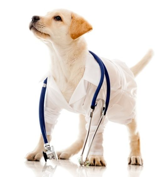 Puppy Vaccination Course Package
