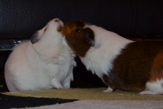 Bubble and George playing tug-of-war with a spinach leaf