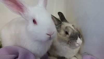 Rabbits together face on
