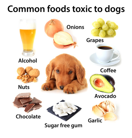 Foods Poisonous to Dogs