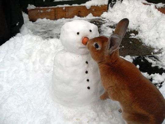 rabbit and snowman